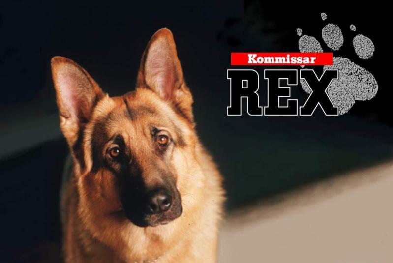 http://moji-milacci.websnadno.cz/rex800x600.png